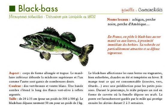 Desc_BlackBass.jpg