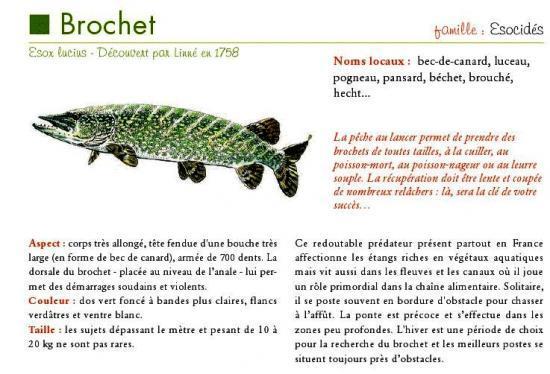 Desc_Brochet.jpg